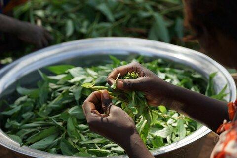 Sahel: Auf wieder fruchtbar gemachten Böden sprießt auch Frieden