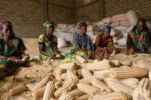 Deutschland stärkt Resilienz von Gemeinschaften im Osten der Demokratischen Republik Kongo mit 50 Millionen Euro